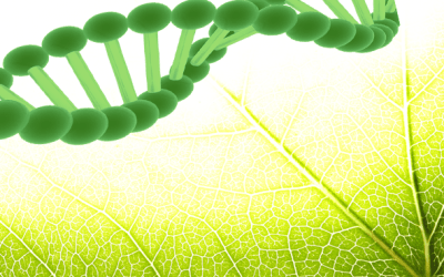 Plant Stem Cell Cosmetics Is the Future of Anti-Aging Skincare